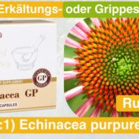 12_Echinacea_santegra-international-com