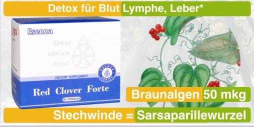 37_Red-Clover-Forte_Detox_Stechwinde-Sarsaparillewurzel_Braunalge_santegra-international-com