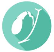 Orgahnuhr - Gallenblase