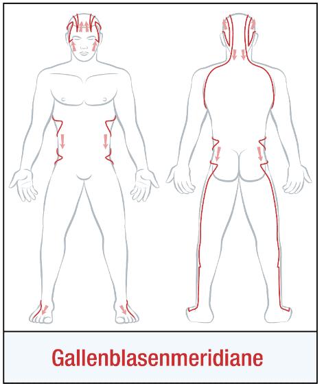 Die Organuhr - Gallenblasenmeridian