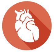 Die Organuhr - Das Herz