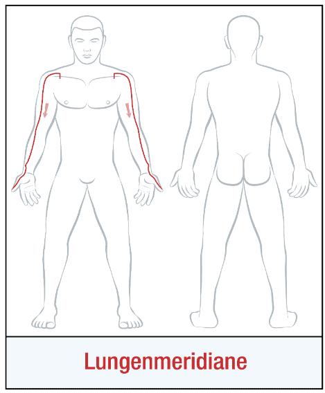 Die Organuhr - Lungenmeridian