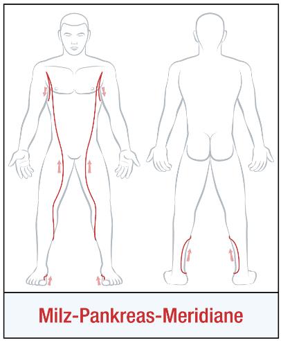 Die Organuhr - Der Milz-Pankreasmeridian