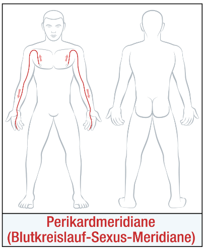 Die Organuhr - Der Pericardmeridian