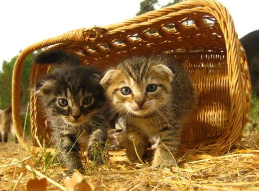 Ihre liebsten Katzenbabies - Jetzt Wurmkur Katze natürlich & Wurmkur Hund online kaufen